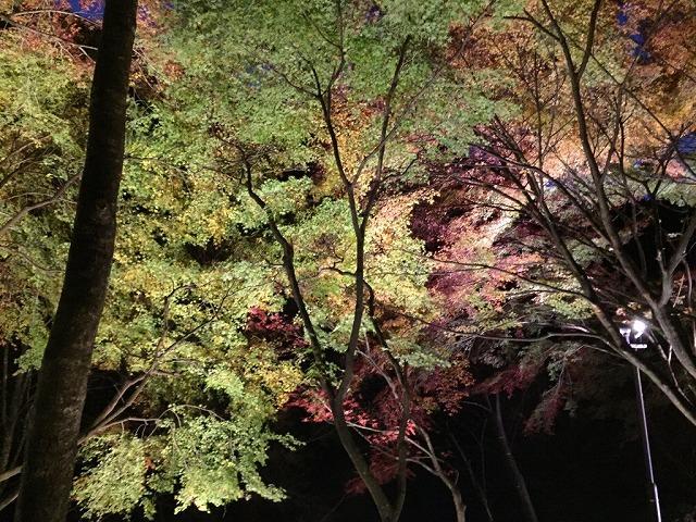 トロッコ列車 夜の紅葉