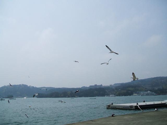 松島の海のかもめ
