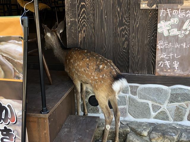 店頭で待つ宮島の鹿