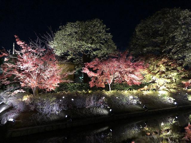 東寺の外堀にある紅葉